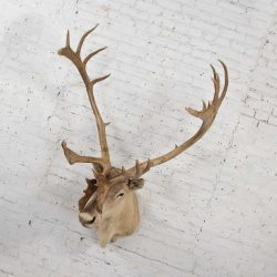 Vintage Caribou Shoulder Taxidermy Mount 1969
